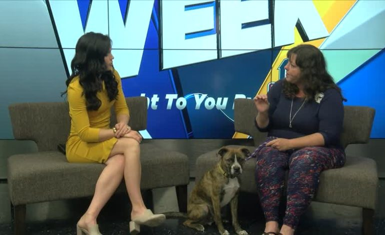 Pet Of The Week: Dogs Pt.2