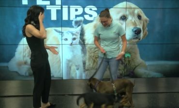 Pet Tips with Aly