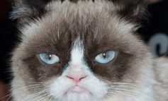 Grumpy Cat, the face of thousands of internet memes, has died