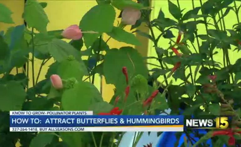 Know To Grow: Attract Butterflies And Hummingbirds To Your Garden