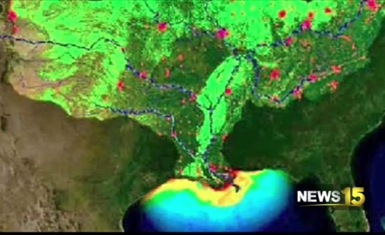 Deadzone In Gulf Of Mexico Projected To Be As Large As Massachusetts; To Cause Headaches For Louisiana Fisherman