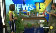 All Seasons Nursery Has Pro Tips To Ward Off Mosquitoes