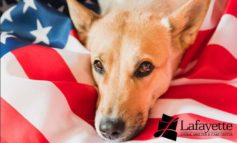 Fourth of July Prep for Your Pets