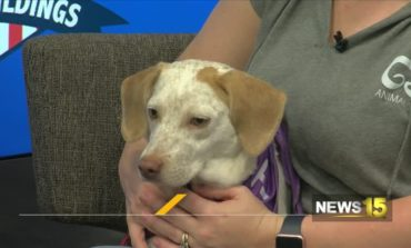 Pet Of The Week: Dog