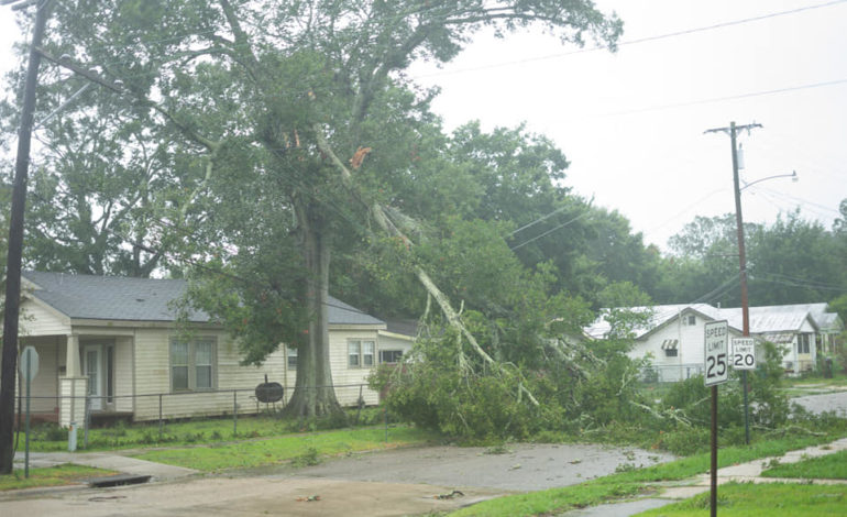Morgan City 1 downed trees