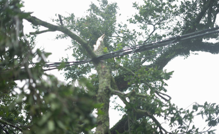 Morgan City Tree limb sitting on power line