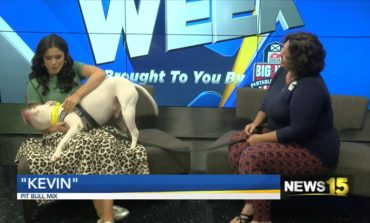 Pet of the Week: Dogs