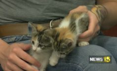 Pet of the Week: Cats