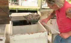 Local Shrimpers Optimistic For The Shrimp Season