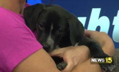 Acadiana Animal Aid: Dog