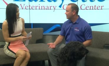 Pain In Pets With Dr. Marc Bordelon