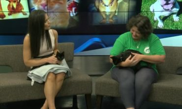 Pet Of The Week: Cats With Macie