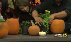 All Seasons Nursery Tackles Pansies And Inventive Ways To Use A Pumpkin