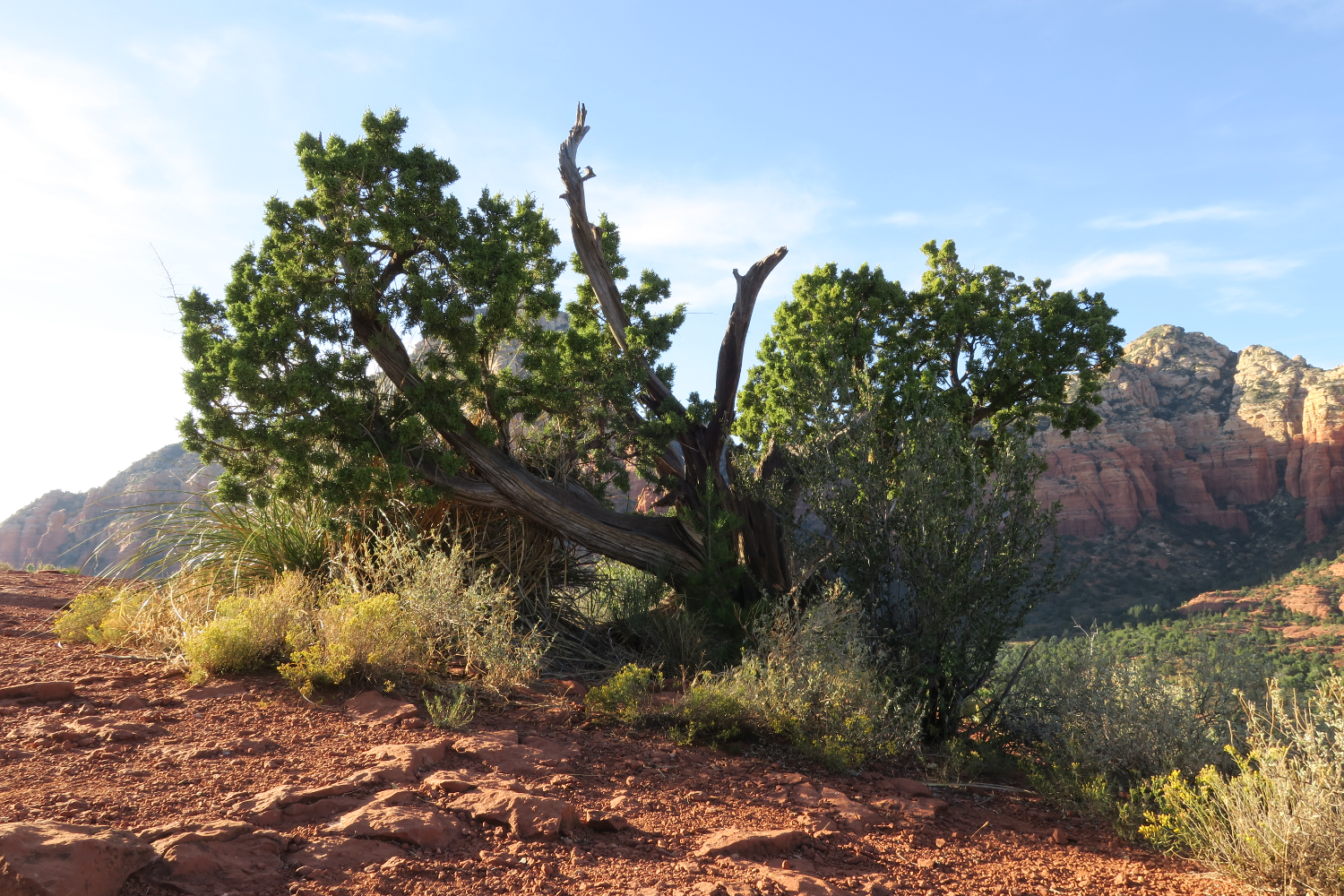 Photo of tree clinging to rock