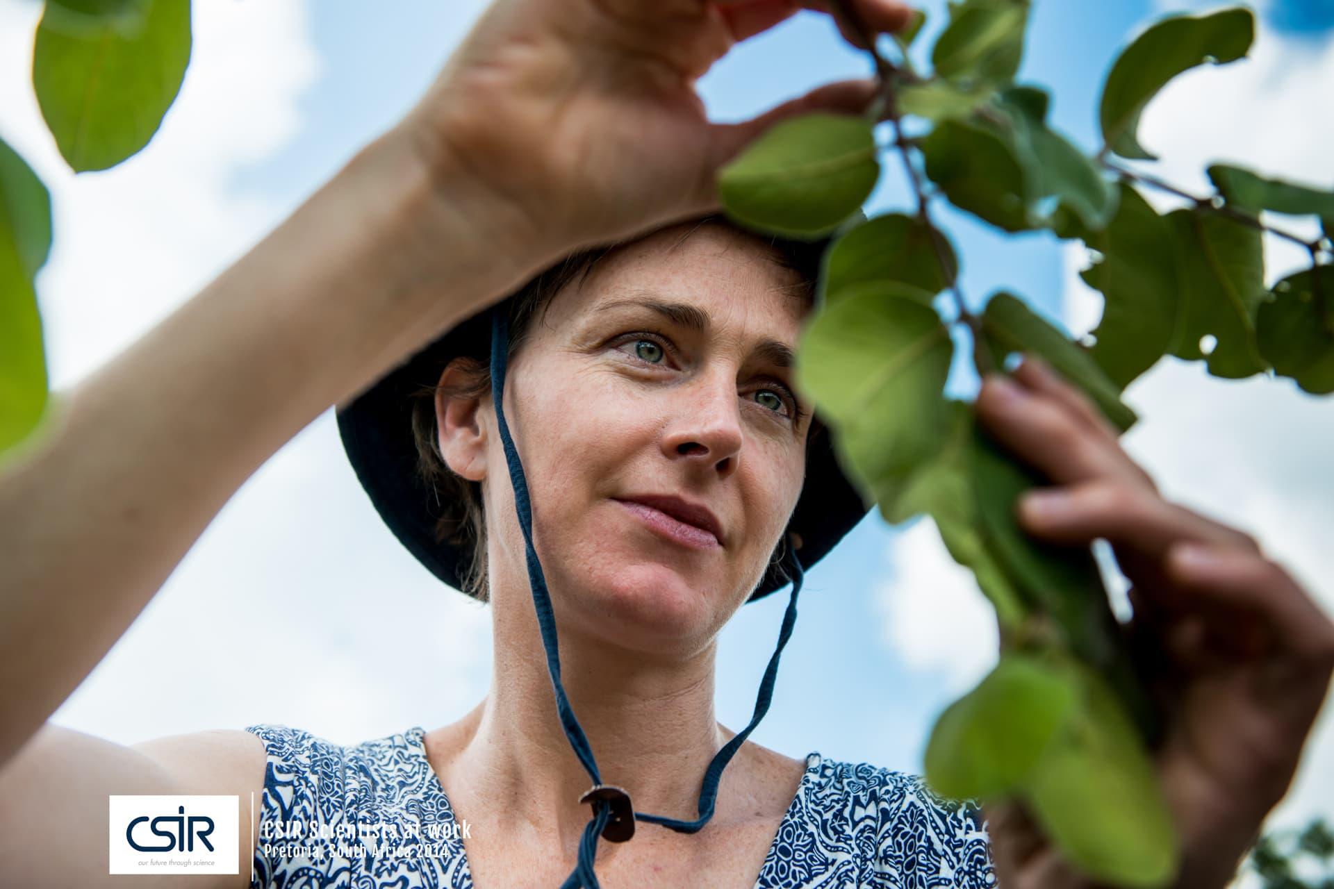 Women inspecting leaves in field
