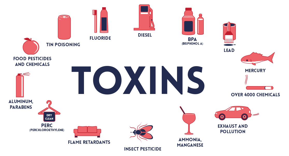 toxins in the body and fat