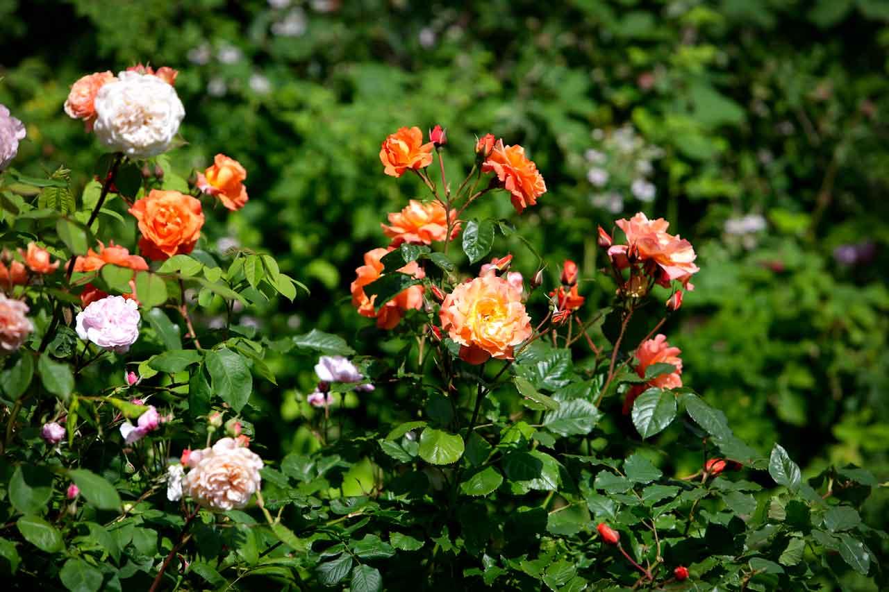 333e02bac 5 tips til anlegging av nytt blomsterbed