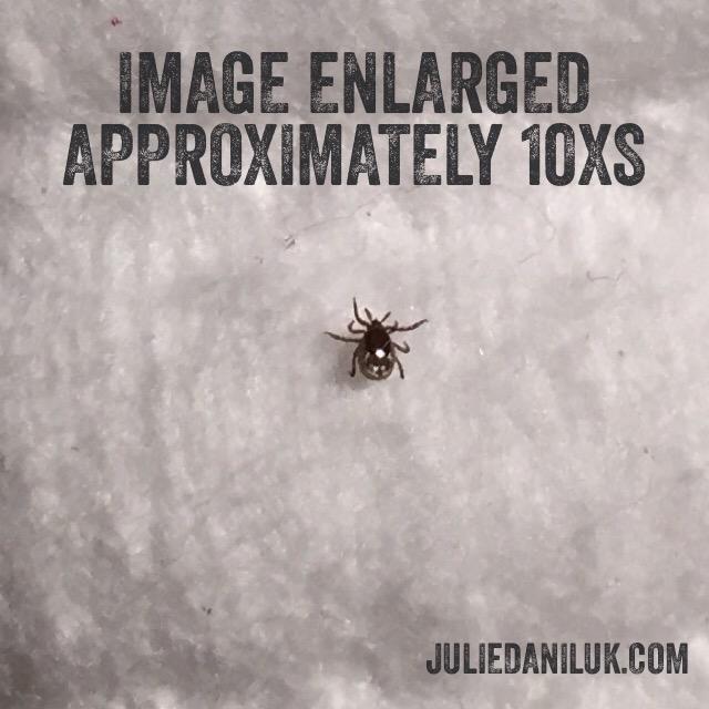 Nutritionist Julie Daniluk's information about ticks and lyme disease