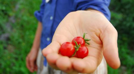 5 Keys Preventing Tomato Disease (no silver bullet, but #1