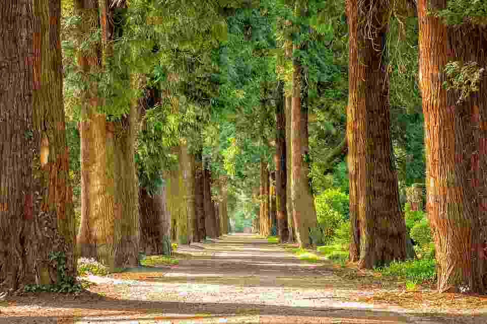 picture of the woods. Exercising in woods can help prevent exosoure to pollutants