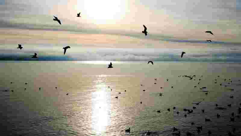birds flying around and naturally having a purpose in life, contrary to humans