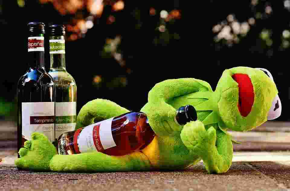 kermit the frog drinking alcohol, as an analogy to the difficulties with adapting to a carnivore diet
