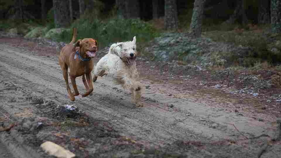 running dogs who by doing so optimize their bodies endocannabinoid system