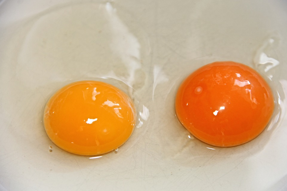 orange yolk from pastured chickens