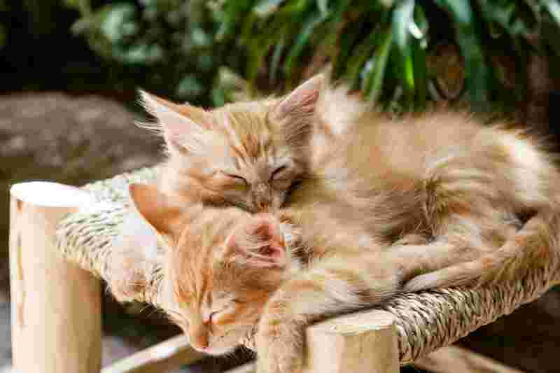 two kittens that are sleeping together, symbolizing their presence and minfulness and happiness in the moment