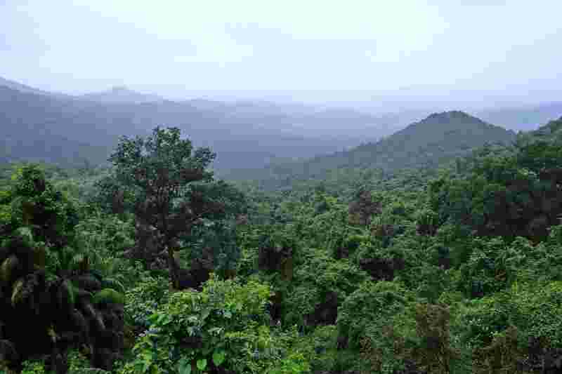 a picture of a rainforest