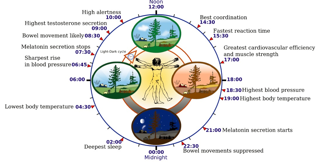 RskLkGSoQeutom5baifl_circadian_rhytm_happiness how to be happy why health is essential in the pursuit of happiness