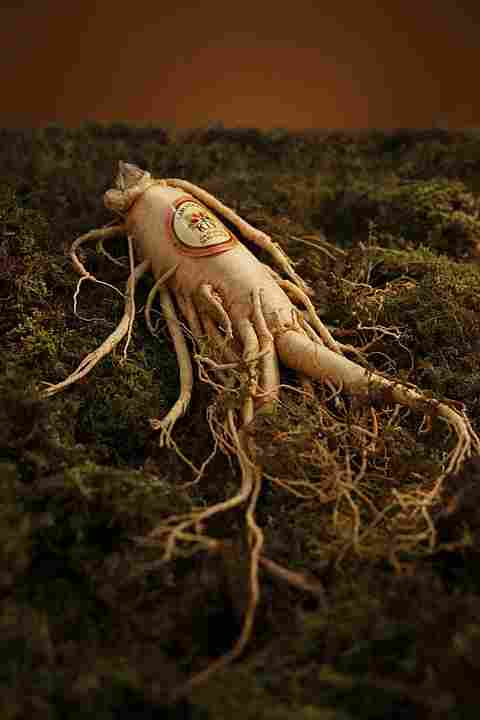 ginseng root, which is calming and lowers stress