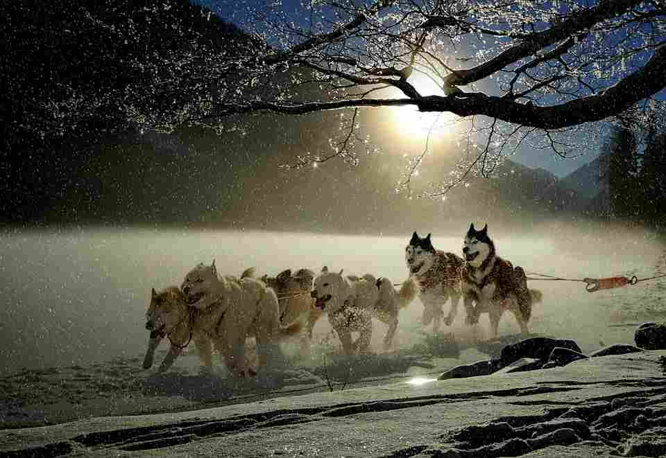 wolves in cold and sunlight which is an analogy for autophagy