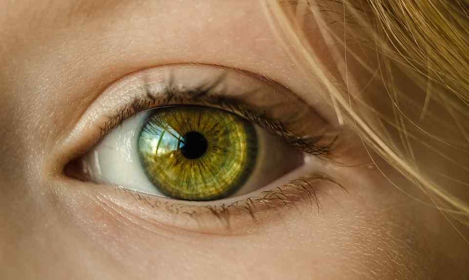 the human eye functions on incoming light