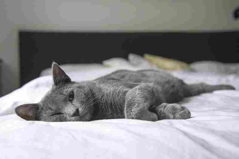 a cat that is sleeping on bed