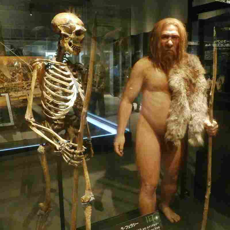a neanderthal visualized, to show their better capacity for insulation than humans do