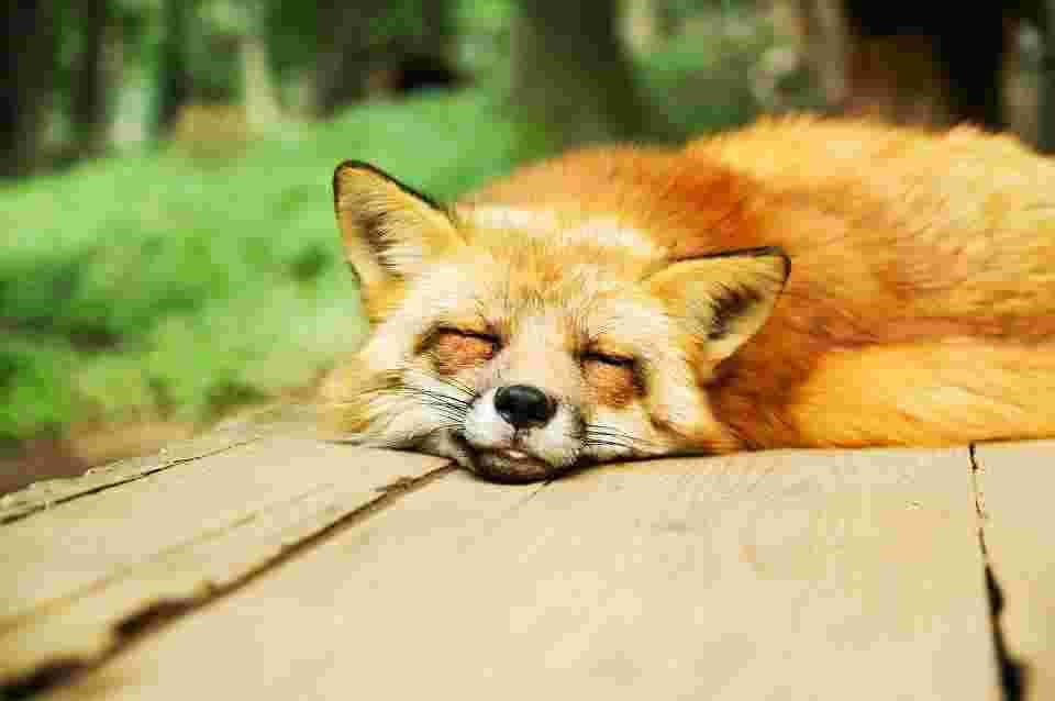 sleep quality is one main benefit