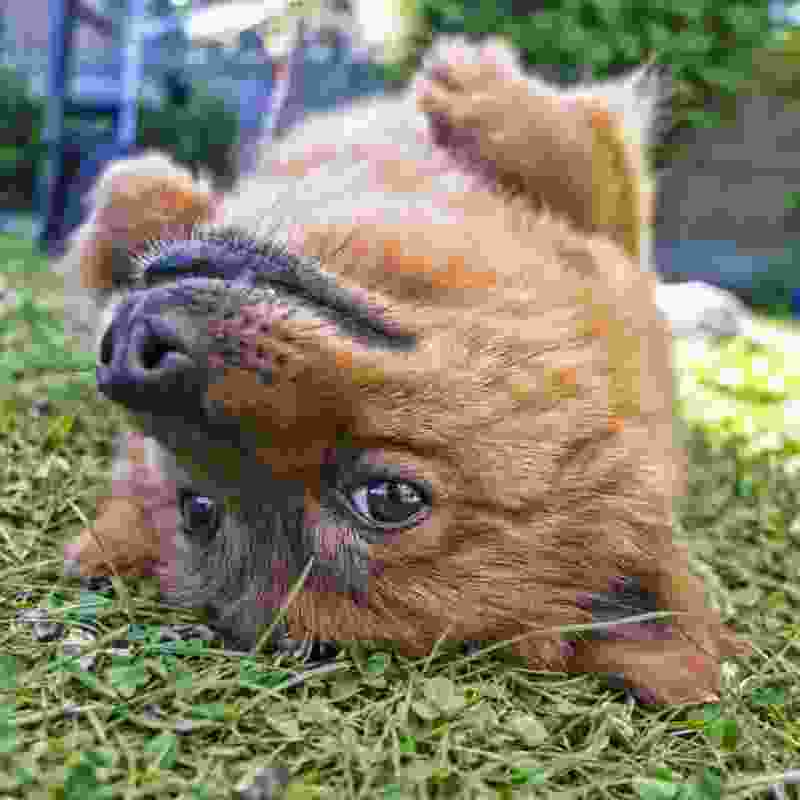 funny looking dog who is laying on his back, used in the context of a joke