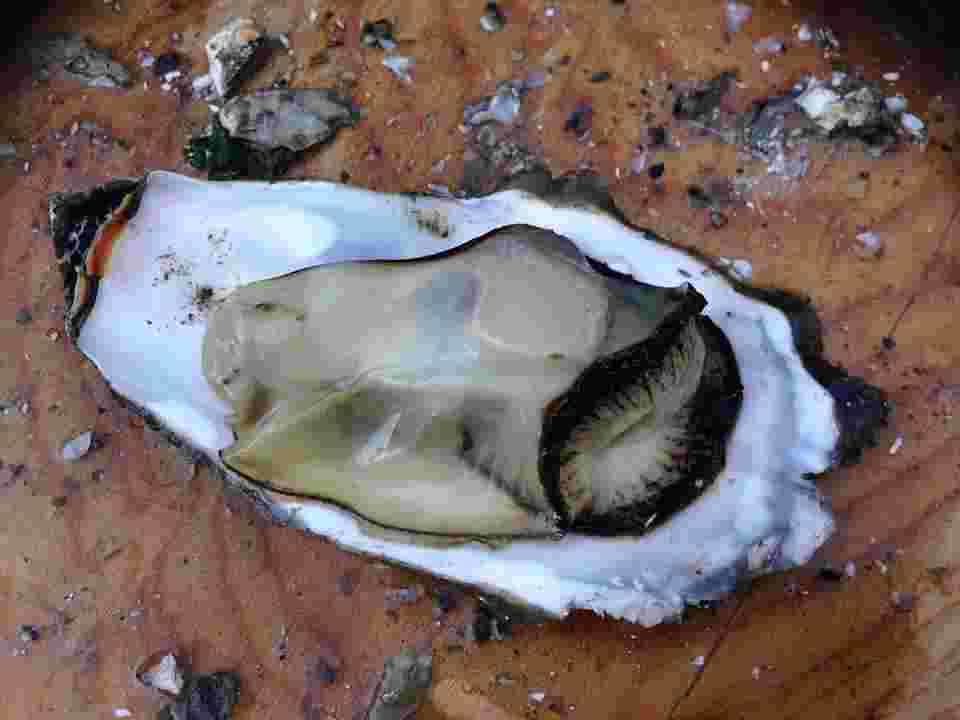mineral rich foods such as oysters support basal metabolic rate