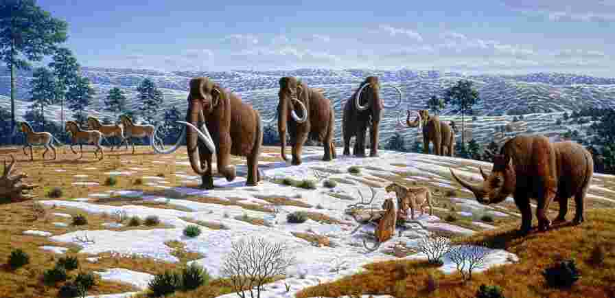 mammoths went extinct tens of thousands of years ago, partially due to human hunting