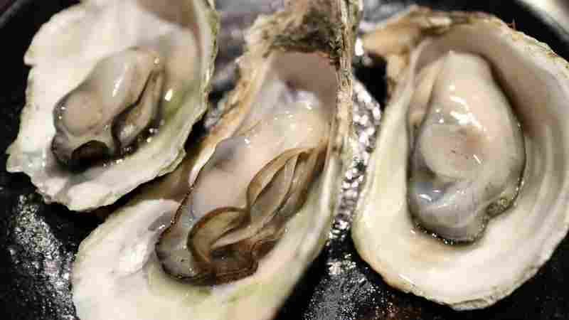 raw oysters picture