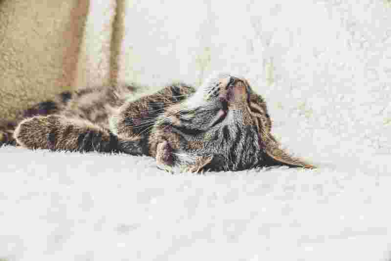 picture of a sleeping cat