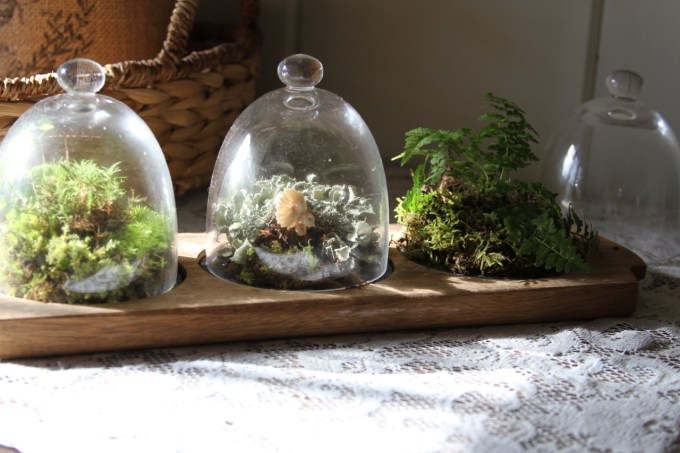 simple woodland terrarium for tabletop decor in your natural home