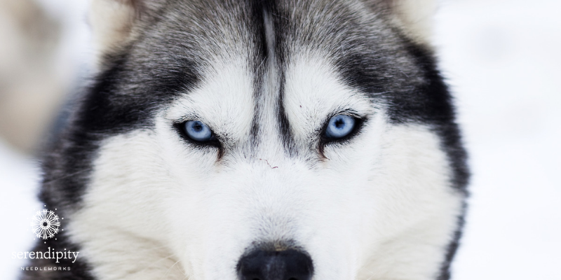 Use the interlocking Gobelin for stitching furry dogs like the Siberian Husky.
