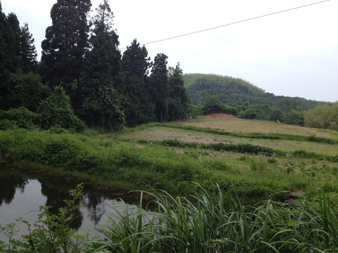 池のむこうには田園風景