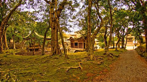 木々の中に立つ番神堂と三十番神堂拝殿