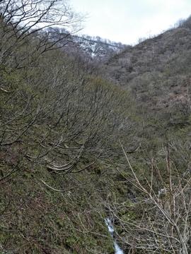 犀角林道最南端。南の奥獅子吼山を越えた涼しい風が