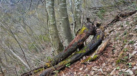 途中の奇木