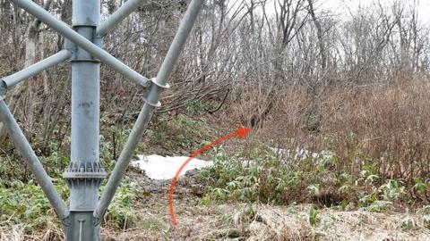 鉄塔加賀幹線28番より奥獅子吼山登山道方向右奥へ