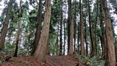 杉林を通って